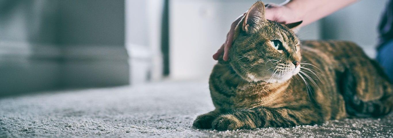 kat kaster op